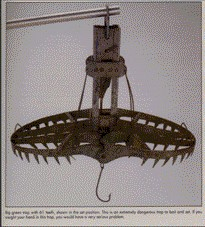 Fish trap with 61 teeth in set position.